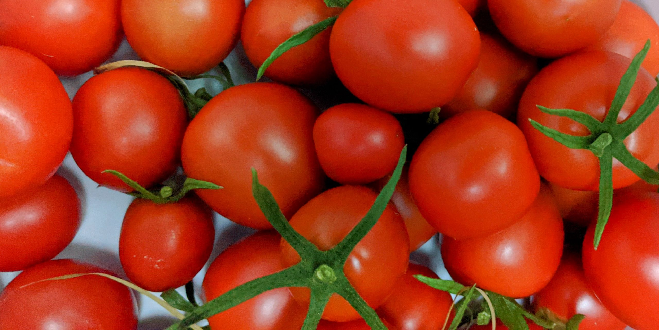 """Read more about the article Tomatensteckbrief """"Dorenia"""""""