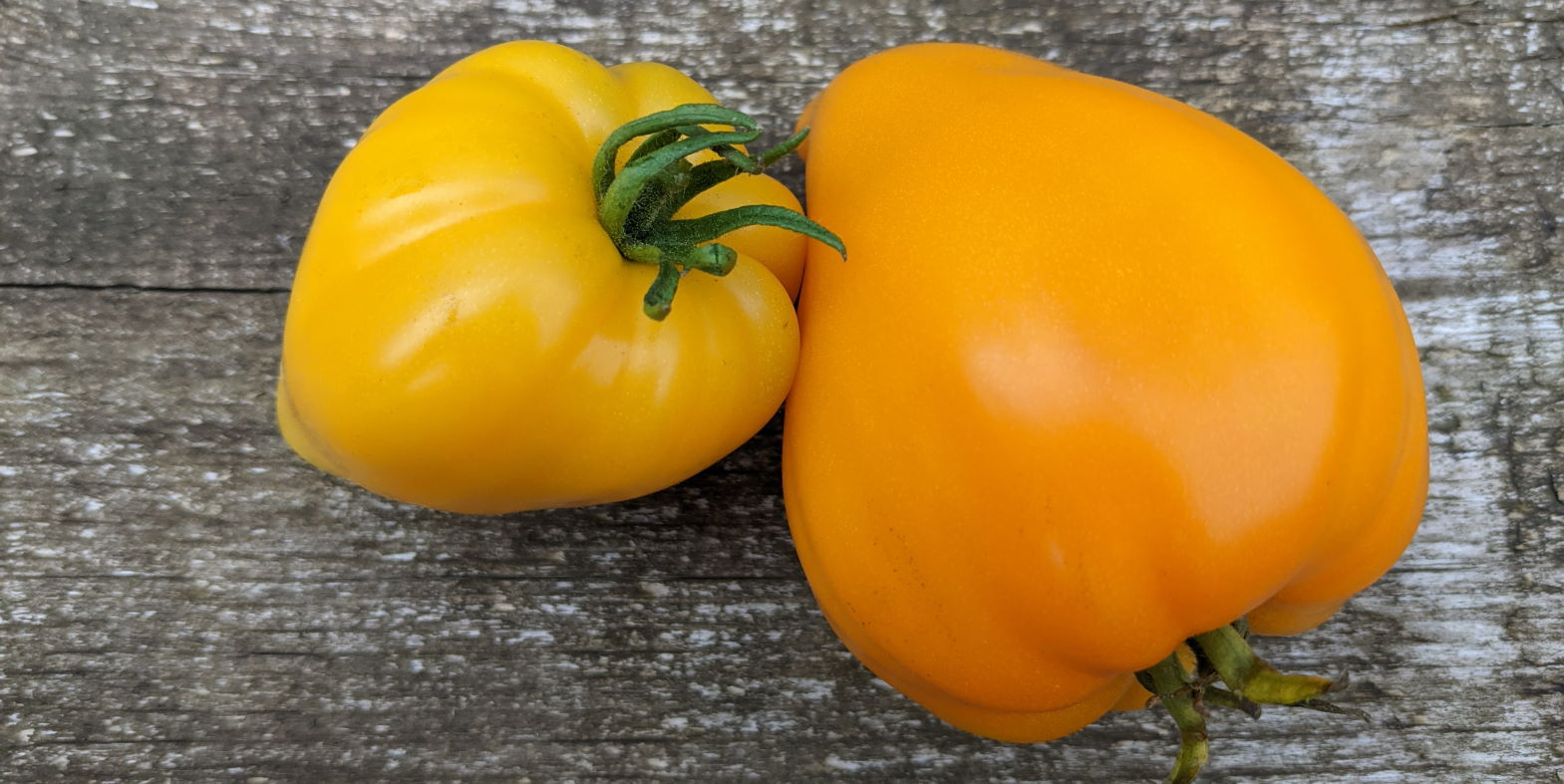 """Read more about the article Tomatensteckbrief """"Heart of Gold"""""""